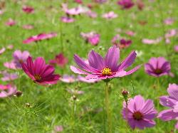 flower-200610.jpg